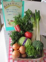 B-8 日立市産 新鮮野菜セット
