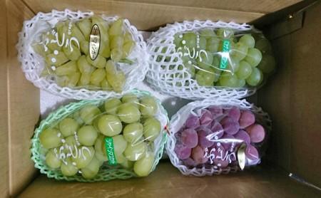 飯田葡萄農園 おまかせ食べ比べぶどうセット 3kg箱
