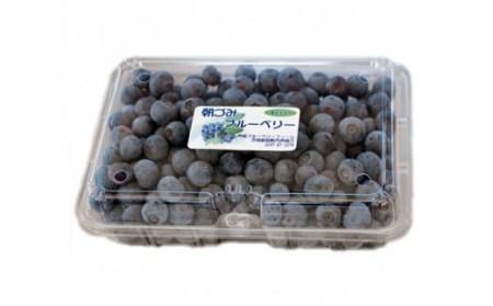【2602-0019】 横田さん家の冷凍完熟ブルーベリー