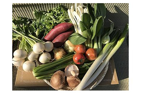 【12ヶ月定期便】自然栽培の野菜詰め合わせ(10~12品目)