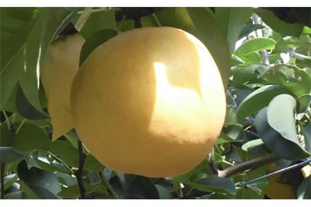D-5 肥沃な土地が育てた八千代町産 「あきづき梨」 5㎏ 今年も100箱をご用意できました。