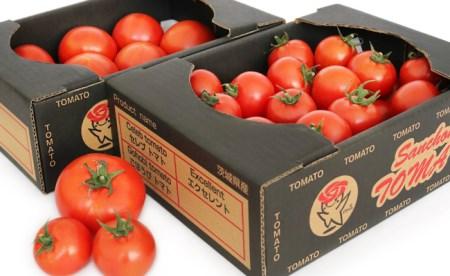 【2605-0015】五霞町の特選高糖度トマト