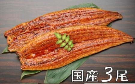 K1628 【今だけ限定】【訳あり】さかい河岸水産の国産うなぎ3尾※サイズ不揃い