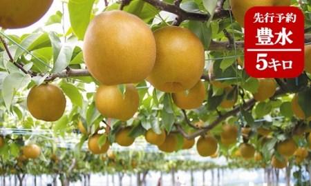 (367)果樹園から直送!境町産豊水梨5キロ【数量限定】