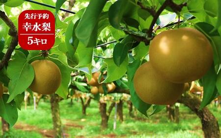 (368)果樹園から直送!境町産幸水梨5キロ【数量限定】