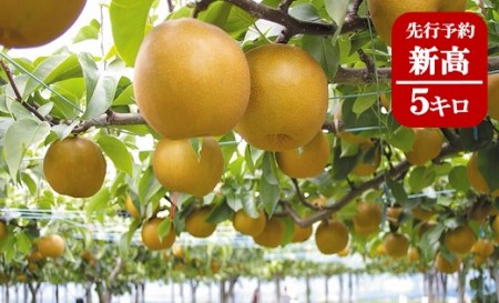 (369)果樹園から直送!境町産新高5キロ【数量限定】