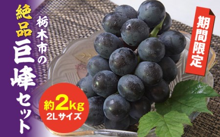 J044 【2019年発送】栃木市の絶品巨峰セット