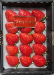 K020-C 高級いちご 栃木市岩舟産スカイベリー
