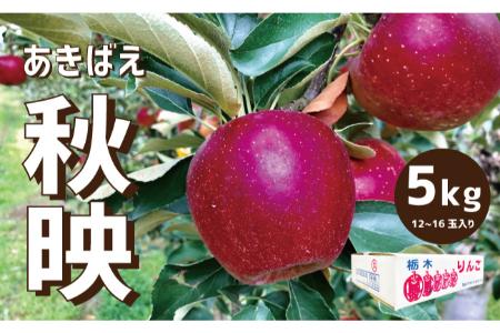 【2609-0088】【先行予約】樹上完熟・葉取らずりんご「秋映」5キロ