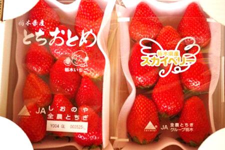 【2609-0003】【期間限定】とちおとめ&スカイベリー 食べ比べセット