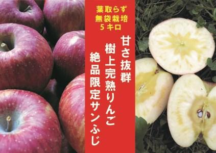 【2609-0038】【期間限定】樹上完熟「葉取らずサンふじ」5kg