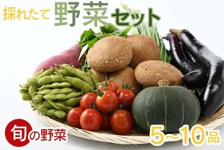 【産地直送】採りたて野菜セット 【菜っ葉館】