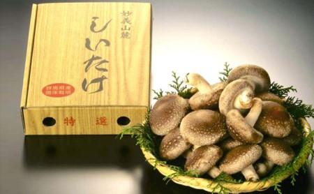 特選菌床生椎茸 700g箱