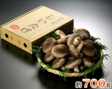【2601-0024】 特選菌床生椎茸700g箱
