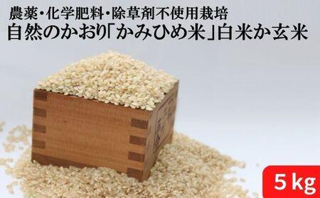 自然のかおり「かみひめ米」白米か玄米 5kg 玄米
