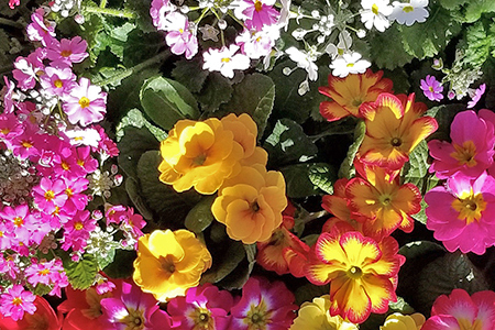【2622-0012】季節の草花 詰め合わせ