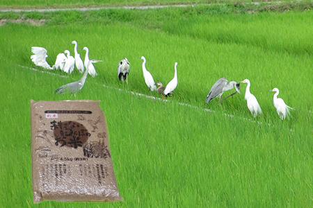 【2622-0029】【新米】無農薬 生き物いっぱいの田んぼでとれたお米コシヒカリ(玄米)4.5㎏