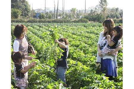 【2622-0037】農園収穫体験チケット(お土産にお米1kg付き)