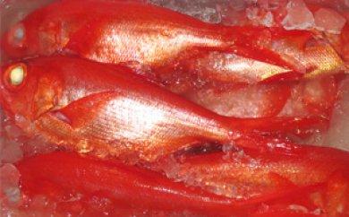 【2606-0145】南房総産黒潮育ち高級「金目鯛」