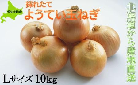ようてい玉ねぎLサイズ10kg≪北海道ようてい産≫