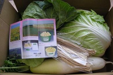 1-8 農家直送!三浦の冬野菜セット