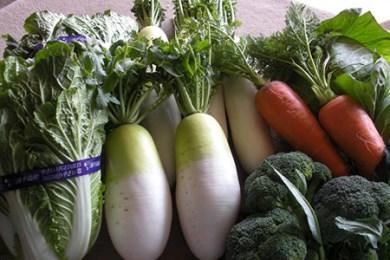 1-9 季節の新鮮野菜詰め合わせ
