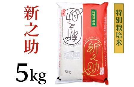 B7-05新潟県長岡産新之助5kg(特別栽培米)