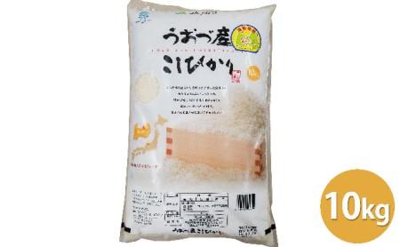 富山県うおづ産こしひかり10kg 白米 富山米 米 精米  富山 魚津