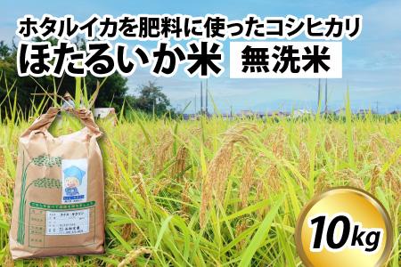 53ほたるいか米(無洗米10kg)【通年発送】