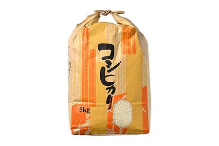 【輪島のお米】町野町産コシヒカリ5kg(精米)