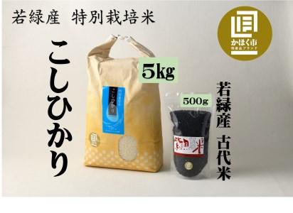 若緑産特別栽培米「こしひかり」 plus 若緑産 古代米