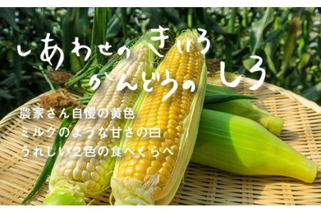 大地の恵み「とうもろこし2色セット」北海道産 6本 03_B034