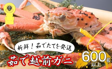 【先行受付】茹で越前ガニ【期間限定】食通もうなる本場の味をぜひ、ご堪能ください。約600g以上×1杯