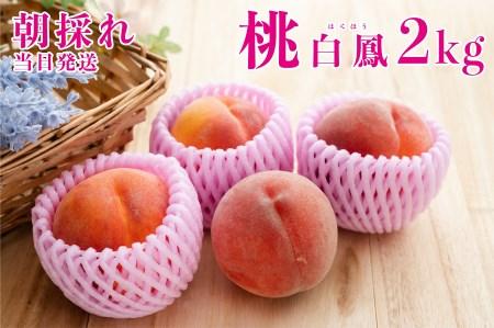 1.5-1-33【2021年7月上旬から発送】採れたて完熟桃 白鳳系 4~8玉(約2kg)