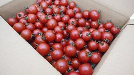 2-9-46 フルーツトマト「トマ糖*太陽のめぐみ」フルティカ2kg