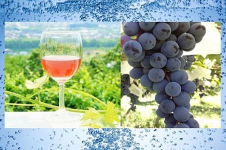 1-3-12 ストレート果汁100%(スパークリング)ジュース「南アルプスのマスカット・ベリーA」2本セット