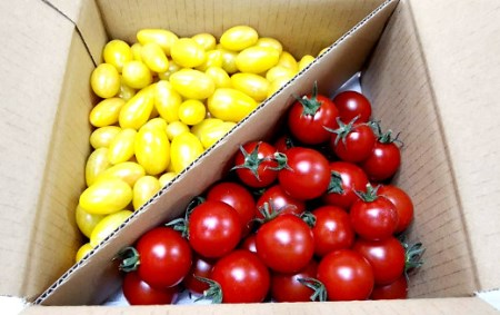 1-9-22 フルーツトマト「太陽のめぐみ」1kg(フルティカ&ティポ)