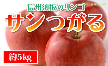 ☆先行予約【信州須坂のりんご】サンつがる≪秀品≫約5kg
