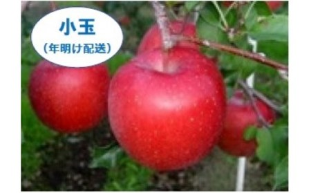 H-06 サンふじ【小玉】 3kg