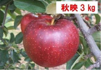 L-08 秋映(あきばえ) 約3kg (2021年産 予約)