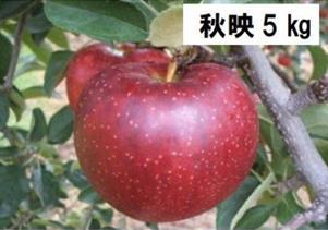 S-1.1 秋映(あきばえ) 約5kg (2021年産 予約)