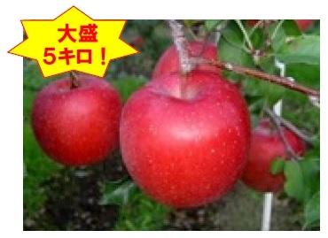 B-1.2 「サンふじ」太陽をいっぱい浴びて育ったりんごの王様【大盛5kg】