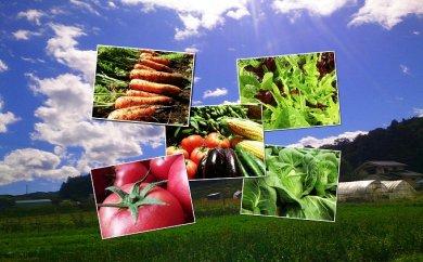 くさぶえ農園の季節の野菜セット