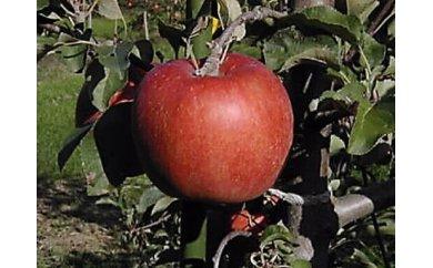 [№5865-0142]佐久のりんご あいかの香り 約3kg 等級 特選品