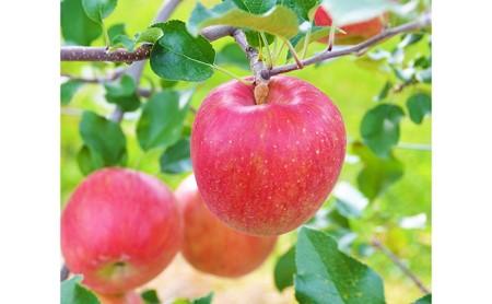信州の旬のりんごおまかせ約5kgセット