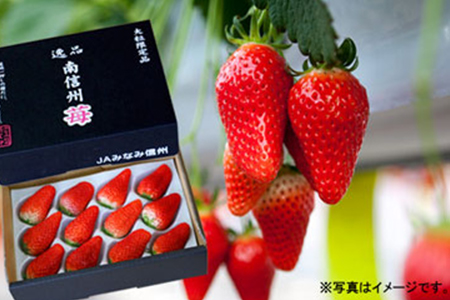 29-A02 喬木産 大粒いちご2箱