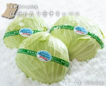 【数量限定!】信州おたり雪中キャベツ1玉(2kg以上)