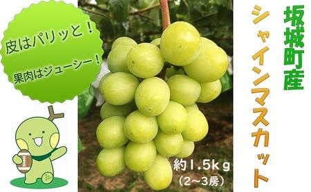 柳澤果樹園シャインマスカット約1.5kg(2房~3房)