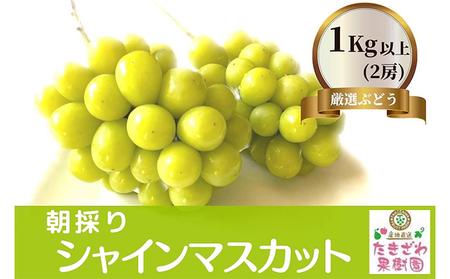 たきざわ果樹園のシャインマスカット約1.2kg(2房)