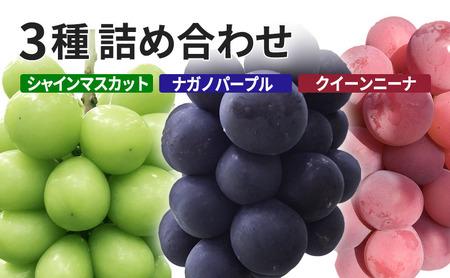 K&Y農園 長野県坂城町産ぶどう おまかせ3種3房入り(シャインマスカット+2種おまかせ)
